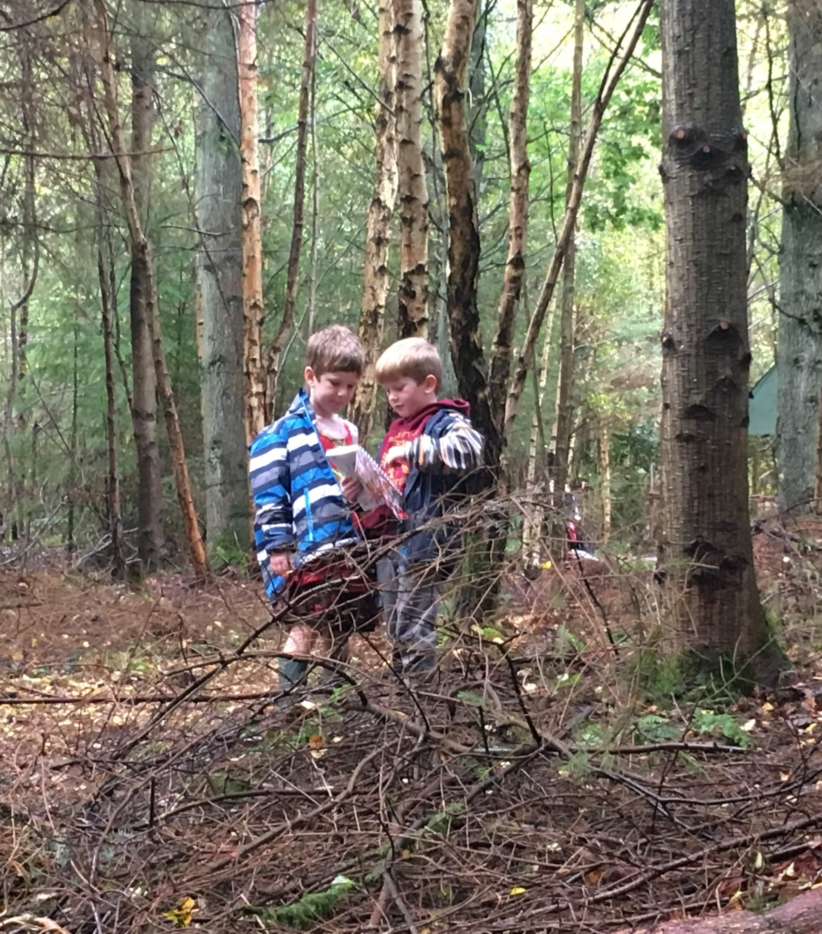 3. In a Woodland Environment